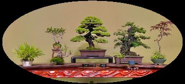 盆栽・苔(Bonsai・Moss)
